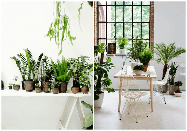 Como decorar con plantas de interior tu casa Dimensi-on