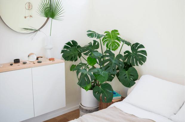 Como y porque decorar con plantas Dimensi-on