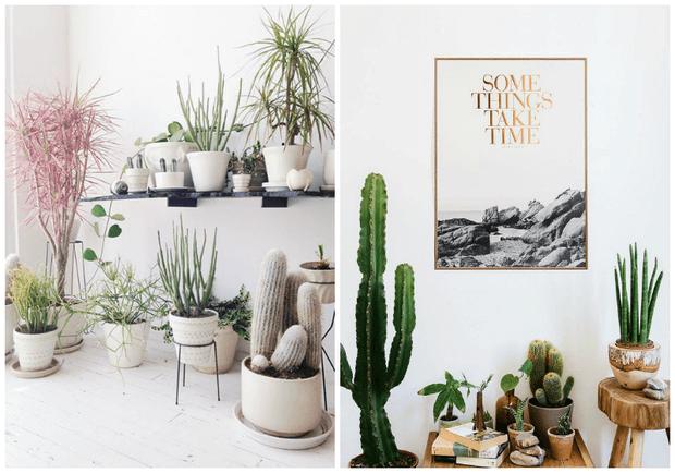 Decoracion de interiores con plantas Dimensi-on