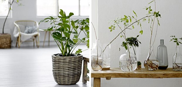 Decoracion primavera con plantas Ideas y consejos Dimensi-on (3)