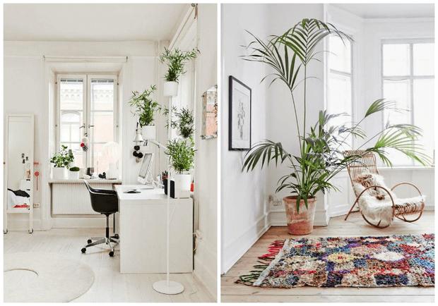 Ideas y consejos para decorar tu casa con plantas de intertior Dimensi-on