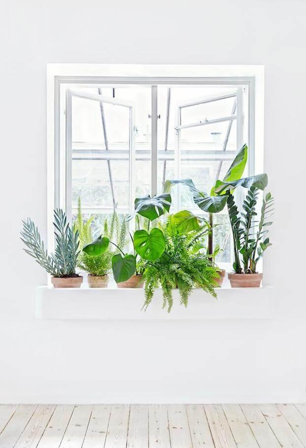 Decorar con colecciones de plantas