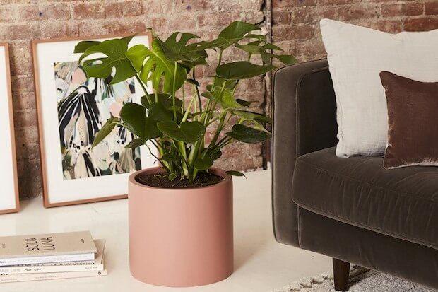 Plantas de interior en la decoración de viviendas