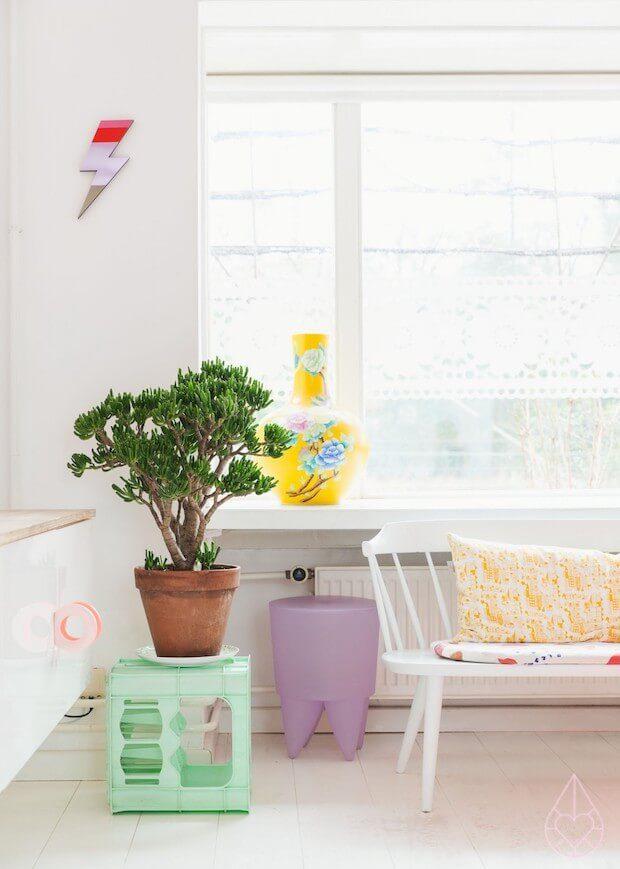 Plantas de interior Crassula Ovata o Árbol de Jade