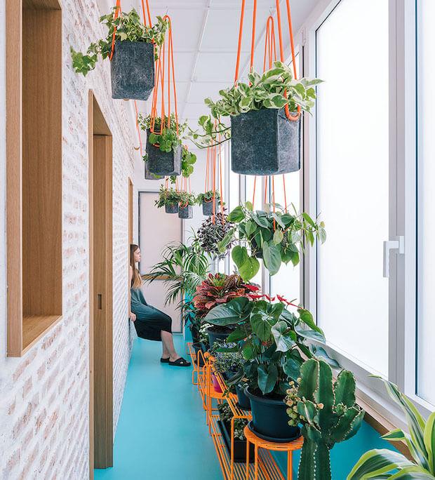 Las plantas te ayudan a mantener tu casa fresca