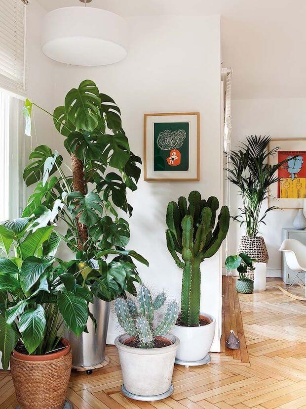 Las plantas te ayudan a dar una vuelta a tu casa tras las vacaciones